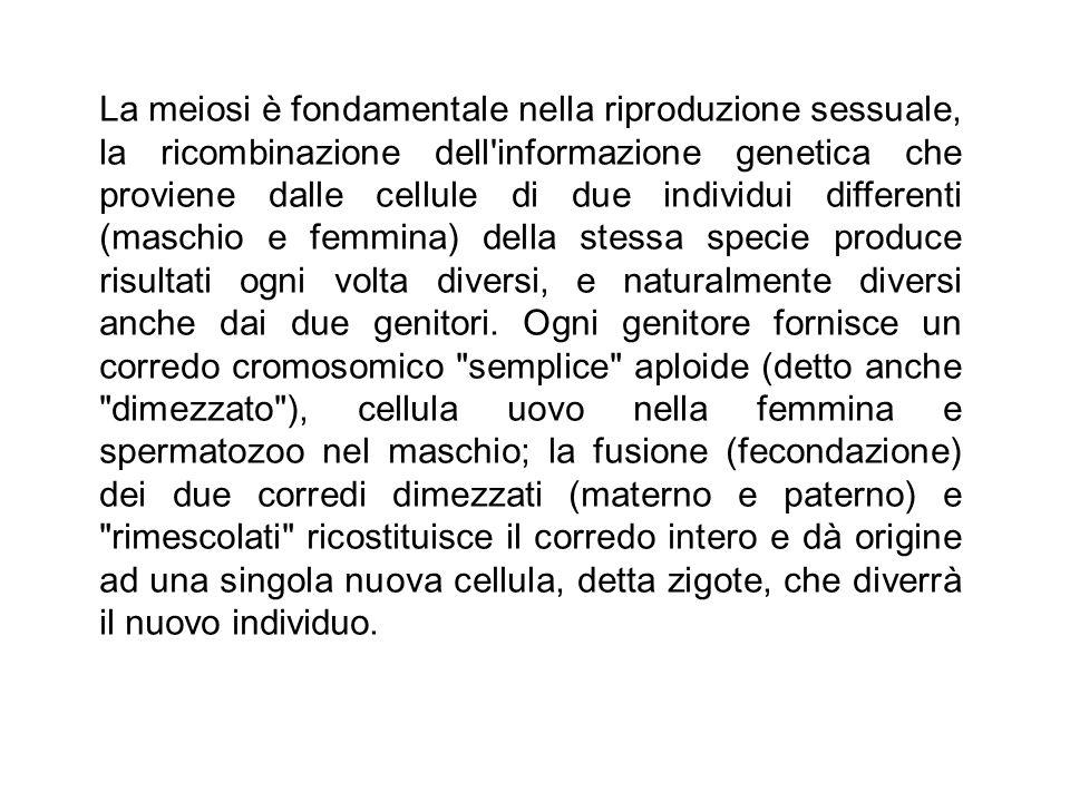 La meiosi è fondamentale nella riproduzione sessuale, la ricombinazione dell'informazione genetica che proviene dalle cellule di due individui differe