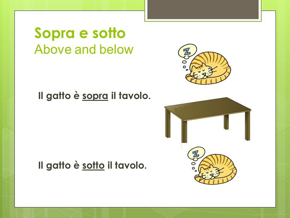 Sopra e sotto Above and below Il gatto è sopra il tavolo. Il gatto è sotto il tavolo.