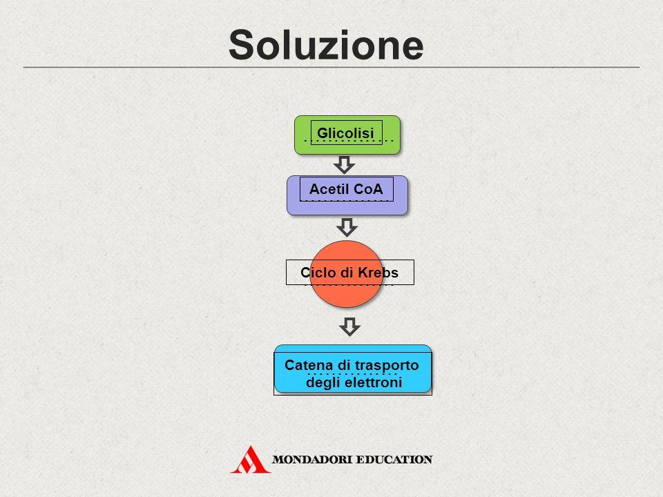 Soluzione Catena di trasporto degli elettroni Ciclo di Krebs Acetil CoA Glicolisi ……………