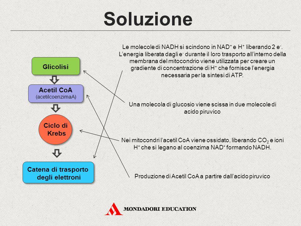 Soluzione Una molecola di glucosio viene scissa in due molecole di acido piruvico Produzione di Acetil CoA a partire dall'acido piruvico Nei mitocondr