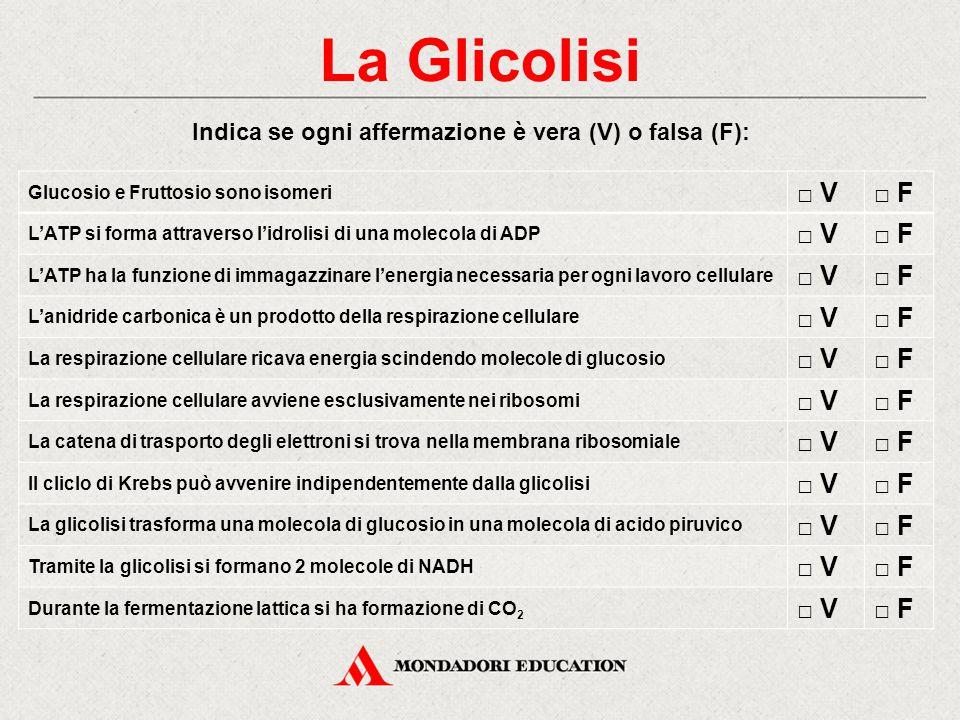 Indica se ogni affermazione è vera (V) o falsa (F): Glucosio e Fruttosio sono isomeri □ V□ F L'ATP si forma attraverso l'idrolisi di una molecola di A