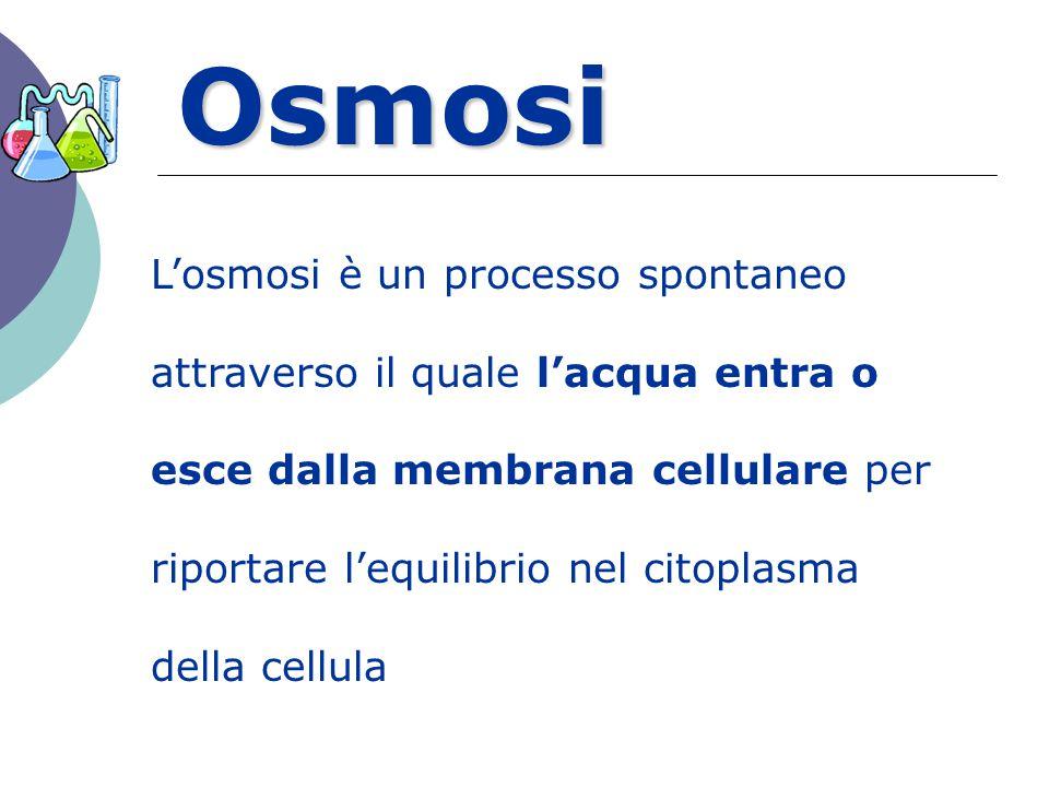 Osmosi L'osmosi è un processo spontaneo attraverso il quale l'acqua entra o esce dalla membrana cellulare per riportare l'equilibrio nel citoplasma de