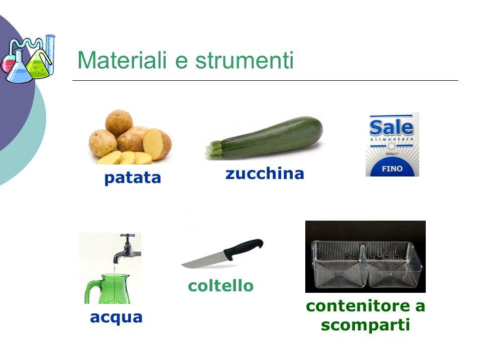Materiali e strumenti patata zucchina acqua coltello contenitore a scomparti