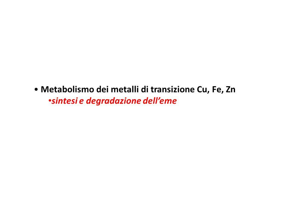 METALLI di transizione Ferro : due forme redox Fe +2 e Fe +3 Rame: due forme redox Cu +1 e Cu +2 possono generare radicali e potenzialmente tossici Omeostasi strettamente regolata da proteine Zinco: una forma Zn +2