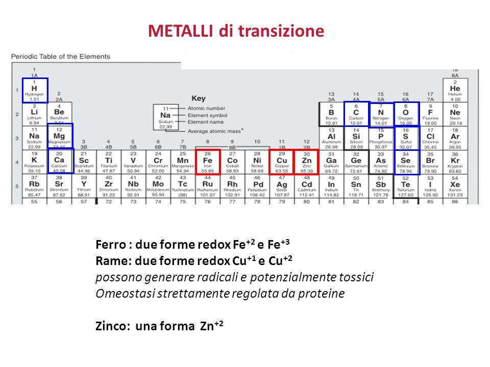 METALLI di transizione Ferro : due forme redox Fe +2 e Fe +3 Rame: due forme redox Cu +1 e Cu +2 possono generare radicali e potenzialmente tossici Om