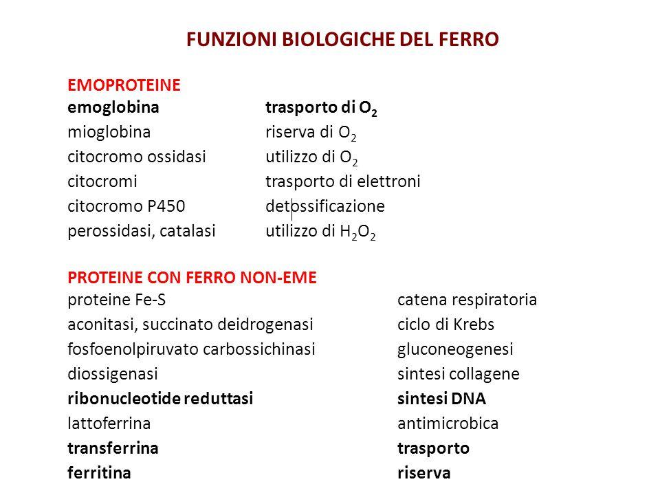 FUNZIONI BIOLOGICHE DEL FERRO EMOPROTEINE emoglobina trasporto di O 2 mioglobina riserva di O 2 citocromo ossidasi utilizzo di O 2 citocromi trasporto