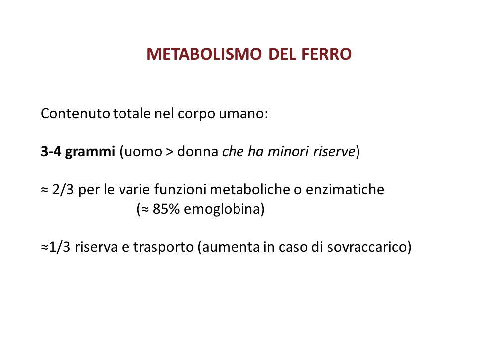 METABOLISMO DEL FERRO Contenuto totale nel corpo umano: 3-4 grammi (uomo > donna che ha minori riserve) ≈ 2/3 per le varie funzioni metaboliche o enzi