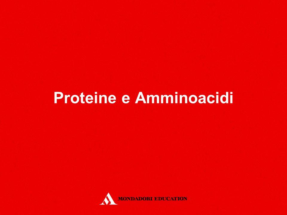 Struttura primaria IntroduzioneAmminoacidiClassificazione Legame peptidico Proteine Struttura ClassificazioneAlbuminaEmoglobina HysLysGlyLeuValLysAlahysLysGlyLeuValLysAlaGly La struttura primaria consiste nella sequenza di amminoacidi da cui è costituita la catena polipeptidica.