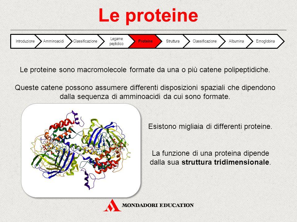 Le proteine IntroduzioneAmminoacidiClassificazione Legame peptidico Proteine StrutturaClassificazioneAlbuminaEmoglobina Le proteine sono macromolecole
