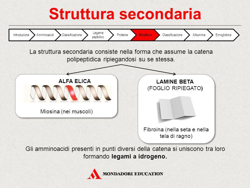 Struttura secondaria IntroduzioneAmminoacidiClassificazione Legame peptidico Proteine Struttura ClassificazioneAlbuminaEmoglobina La struttura seconda