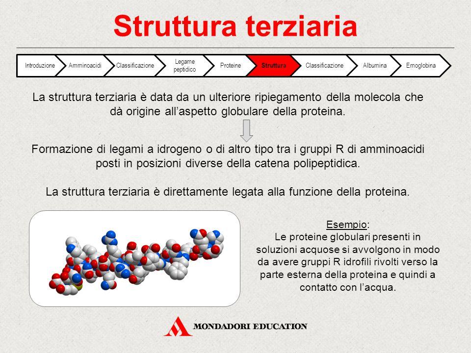 Struttura terziaria IntroduzioneAmminoacidiClassificazione Legame peptidico Proteine Struttura ClassificazioneAlbuminaEmoglobina La struttura terziari