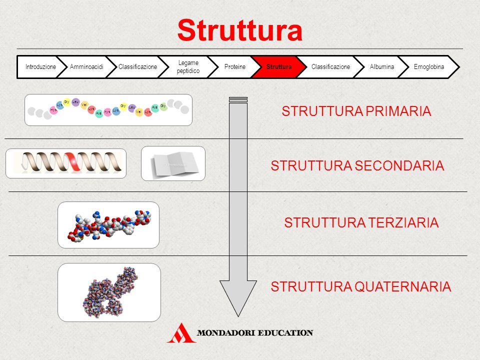 Struttura IntroduzioneAmminoacidiClassificazione Legame peptidico Proteine Struttura ClassificazioneAlbuminaEmoglobina STRUTTURA PRIMARIA STRUTTURA SE