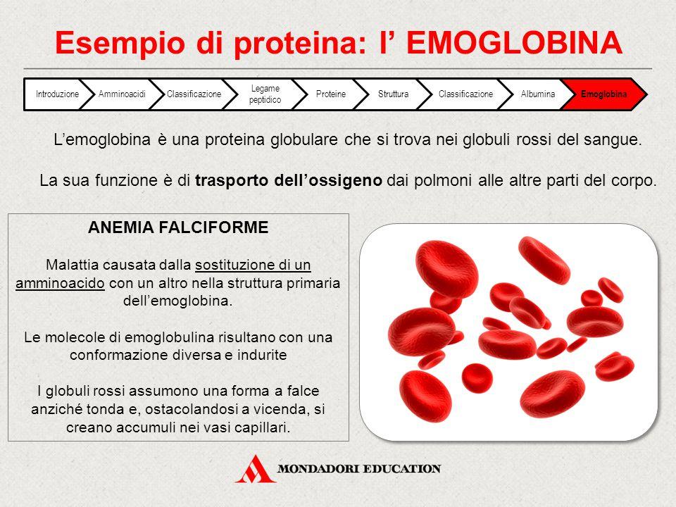 Esempio di proteina: l' EMOGLOBINA IntroduzioneAmminoacidiClassificazione Legame peptidico ProteineStrutturaClassificazioneAlbumina Emoglobina L'emogl