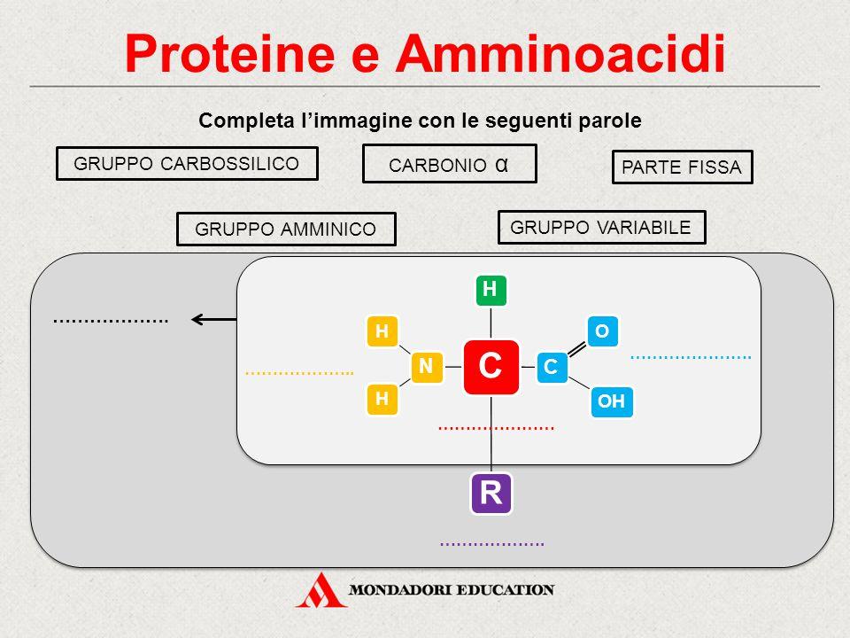 Proteine e Amminoacidi Completa l'immagine con le seguenti parole GRUPPO AMMINICO GRUPPO CARBOSSILICO GRUPPO VARIABILE CARBONIO α PARTE FISSA ………………….
