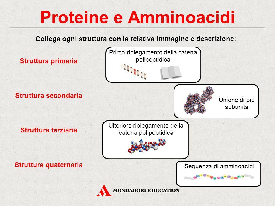 Proteine e Amminoacidi Collega ogni struttura con la relativa immagine e descrizione: Struttura primaria Struttura terziaria Struttura secondaria Stru