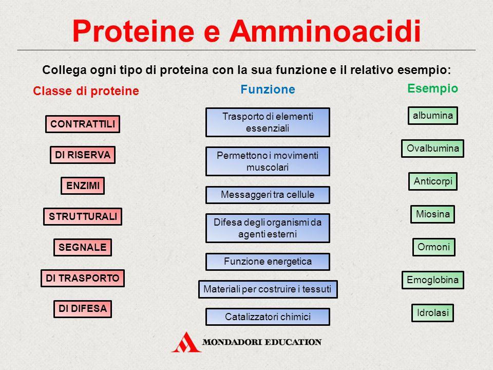Proteine e Amminoacidi Collega ogni tipo di proteina con la sua funzione e il relativo esempio: STRUTTURALI CONTRATTILI DI RISERVA DI DIFESA DI TRASPO