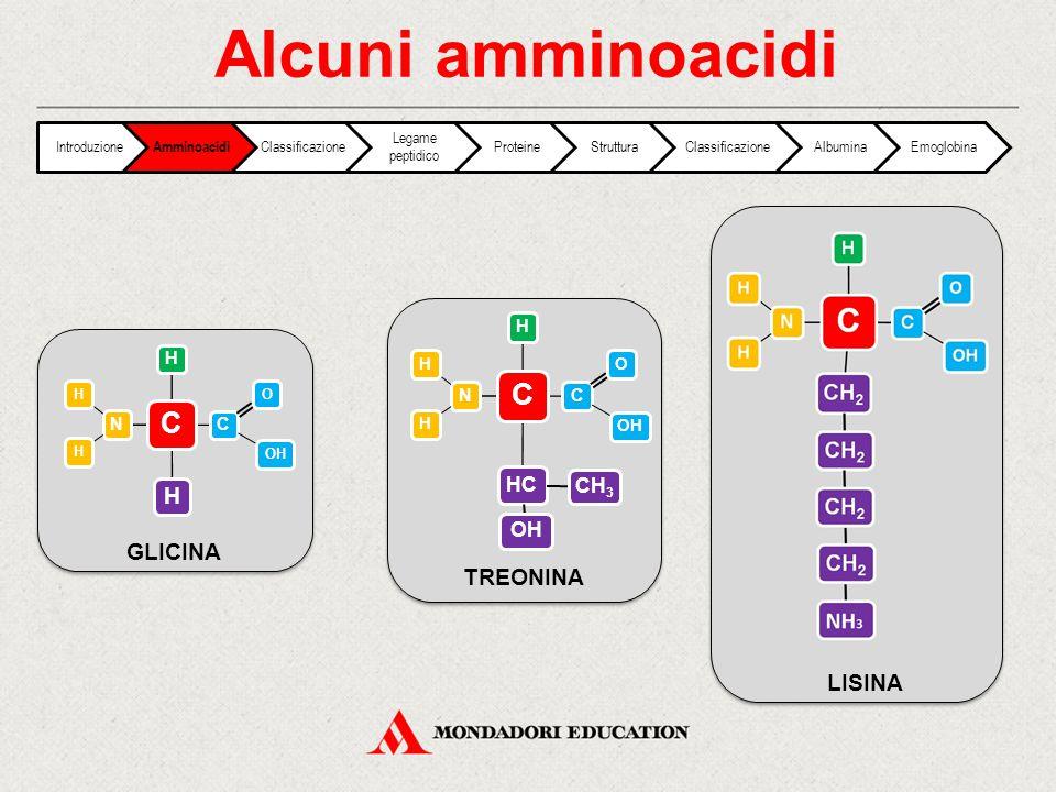 Alcuni amminoacidi C N HH C OOH H H GLICINA C N HH C OOH H HC CH3 OH TREONINA LISINA Introduzione Amminoacidi Classificazione Legame peptidico Protein