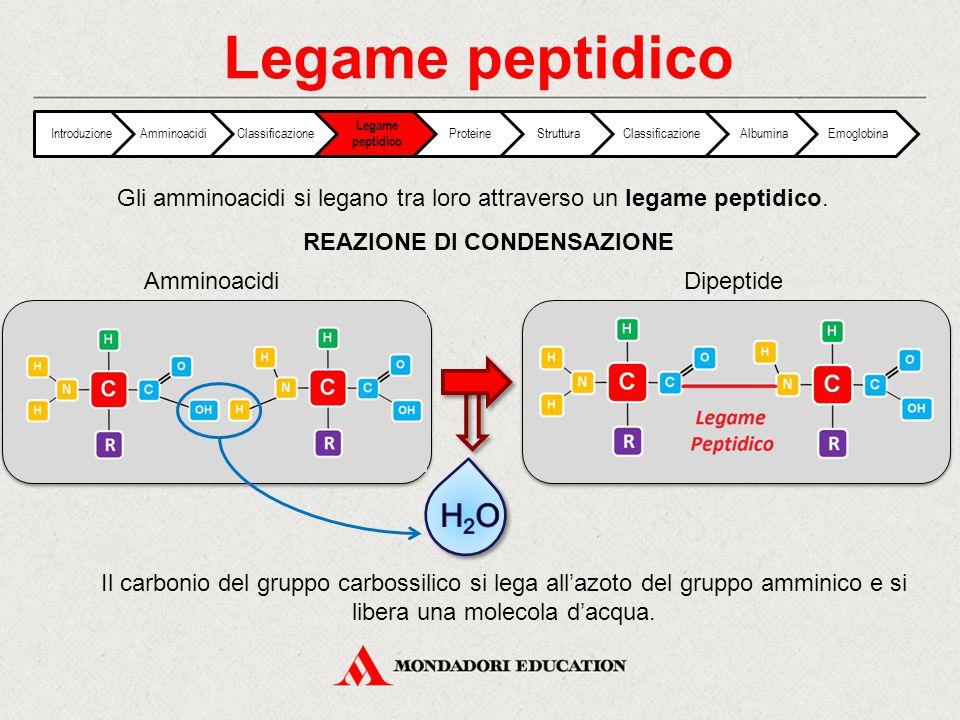 Gli amminoacidi si legano tra loro attraverso un legame peptidico. REAZIONE DI CONDENSAZIONE AmminoacidiDipeptide Il carbonio del gruppo carbossilico