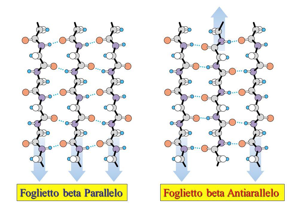 Foglietto beta Parallelo Foglietto beta Antiarallelo