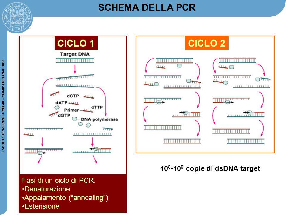 FACOLTA' DI SCIENZE FF MM NN – CHIMICA BIOANALITICA CICLO 2 SCHEMA DELLA PCR 10 8 -10 9 copie di dsDNA target CICLO 1 Fasi di un ciclo di PCR: Denatur