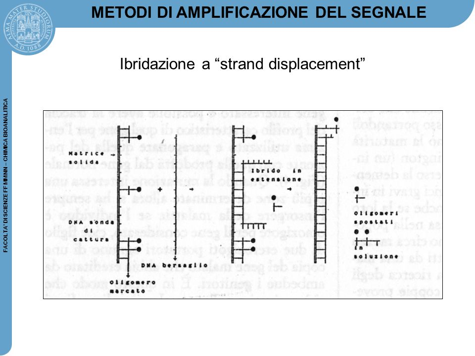 FACOLTA' DI SCIENZE FF MM NN – CHIMICA BIOANALITICA RT-PCR: 1.Isolate RNA (total or polyA) 2.Convert to cDNA (complementary DNA, using the reverse transcriptase) 3.Use the DNA as template for the PCR reaction 4.Visualize fragment on agarose gel Reverse Transcriptase PCR