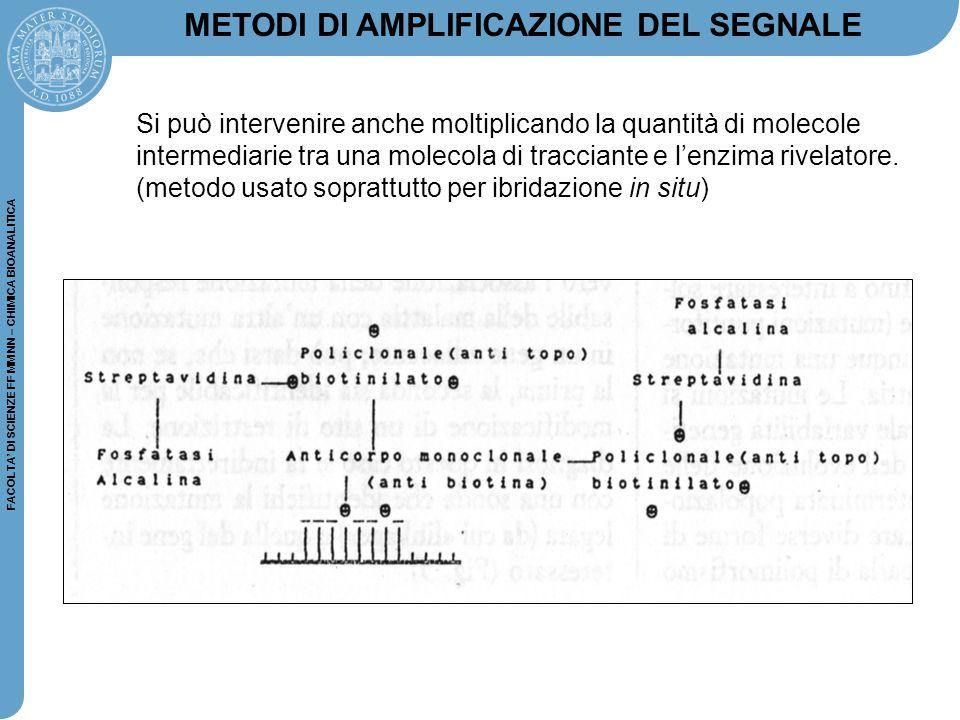 FACOLTA' DI SCIENZE FF MM NN – CHIMICA BIOANALITICA METODI DI AMPLIFICAZIONE DEL SEGNALE Si può intervenire anche moltiplicando la quantità di molecol
