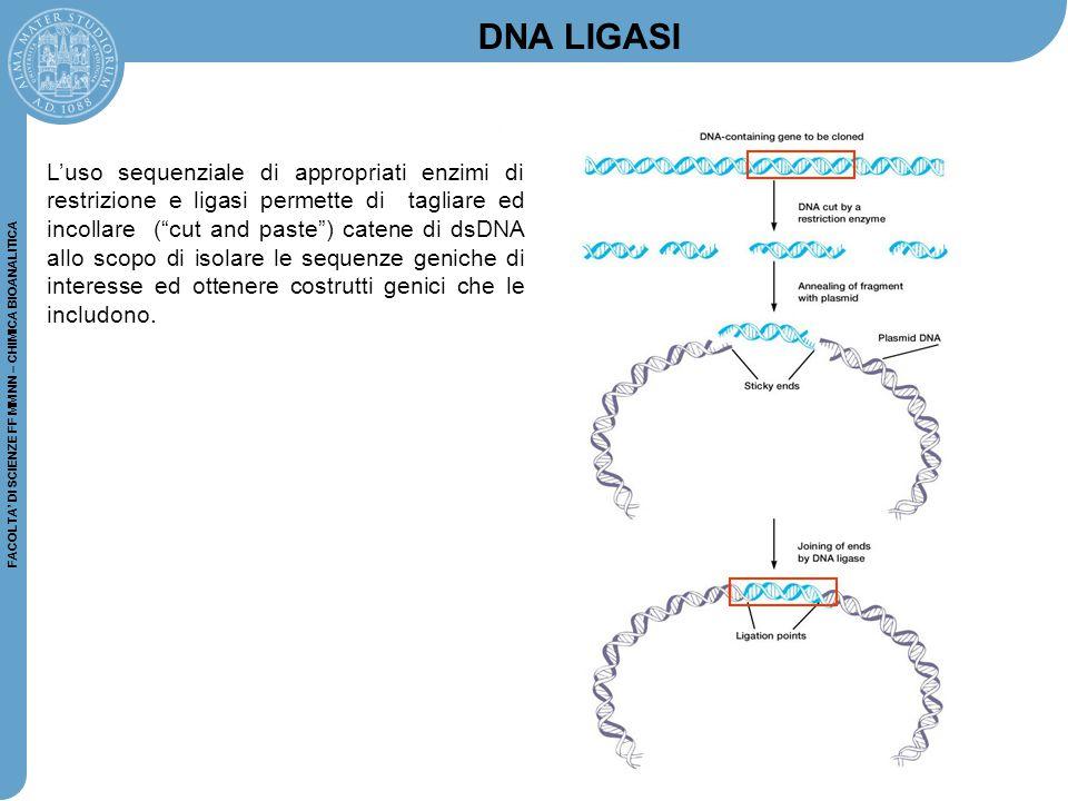 FACOLTA' DI SCIENZE FF MM NN – CHIMICA BIOANALITICA L'uso sequenziale di appropriati enzimi di restrizione e ligasi permette di tagliare ed incollare