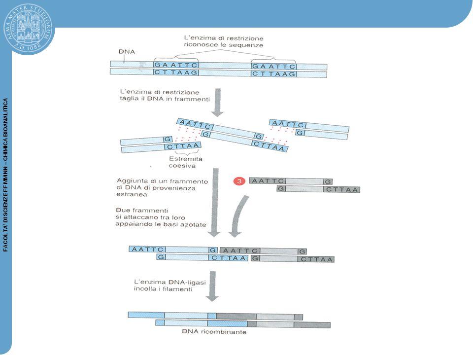 FACOLTA' DI SCIENZE FF MM NN – CHIMICA BIOANALITICA L'RNA od il cDNA relativi ad un campione patologico e quello relativo al suo controllo vengono marcati con un diverso tipo di fluorocromo.
