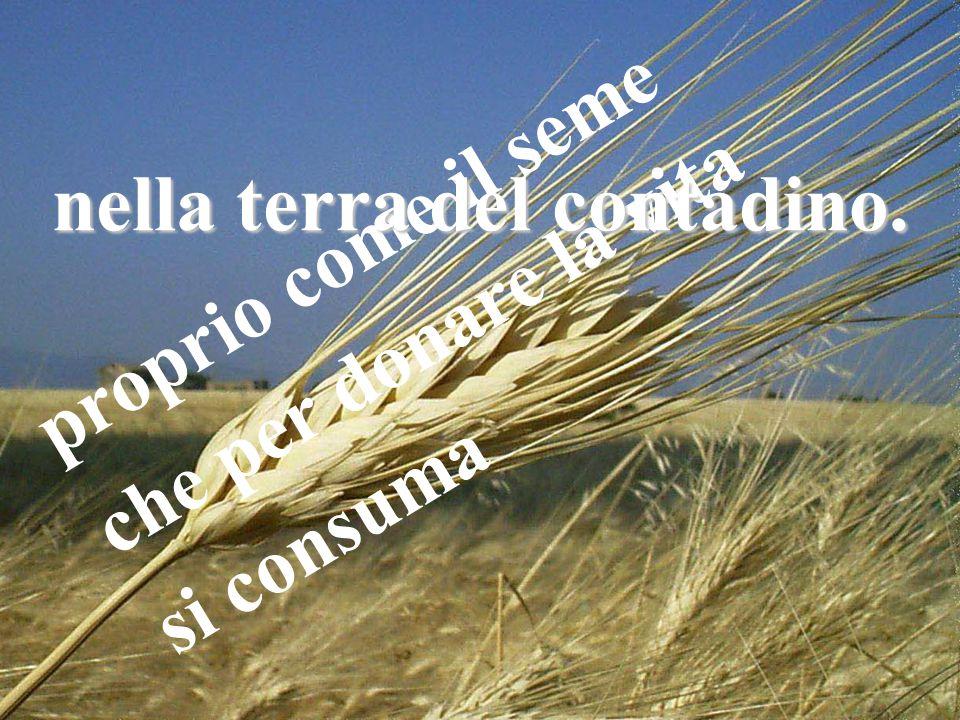 p r o p r i o c o m e i l s e m e c h e p e r d o n a r e l a v i t a s i c o n s u m a nella terra del contadino.
