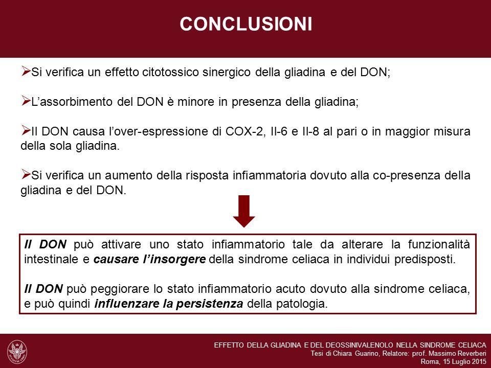 CONCLUSIONI  Si verifica un effetto citotossico sinergico della gliadina e del DON;  L'assorbimento del DON è minore in presenza della gliadina;  Il DON causa l'over-espressione di COX-2, Il-6 e Il-8 al pari o in maggior misura della sola gliadina.