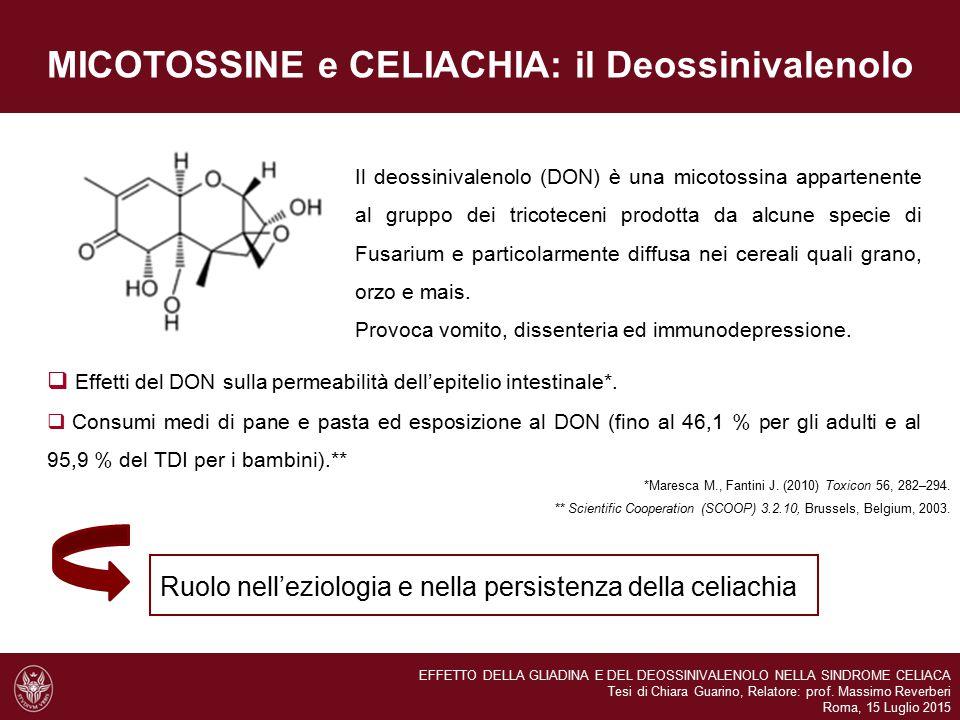 MICOTOSSINE e CELIACHIA: il Deossinivalenolo *Maresca M., Fantini J. (2010) Toxicon 56, 282–294. Il deossinivalenolo (DON) è una micotossina appartene