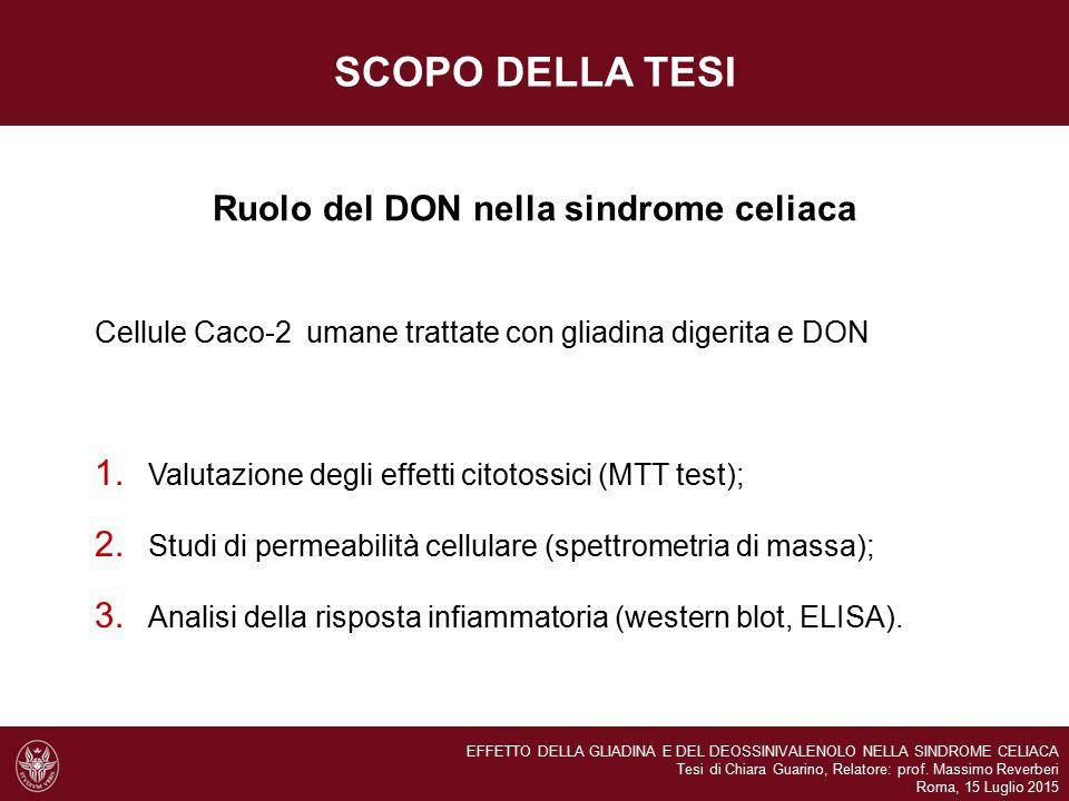 SCOPO DELLA TESI Ruolo del DON nella sindrome celiaca Cellule Caco-2 umane trattate con gliadina digerita e DON 1. Valutazione degli effetti citotossi