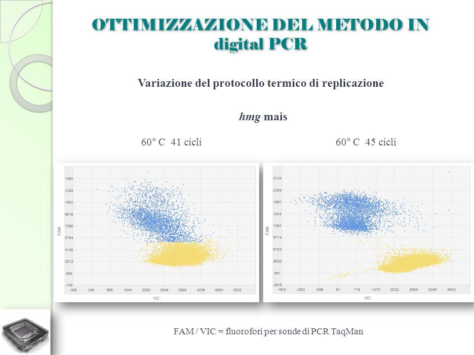 OTTIMIZZAZIONE DEL METODO IN digital PCR Variazione del protocollo termico di replicazione 60° C 41 cicli60° C 45 cicli hmg mais FAM / VIC = fluorofor