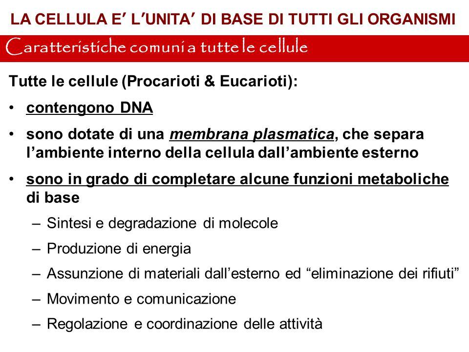 Tutte le cellule (Procarioti & Eucarioti): contengono DNA sono dotate di una membrana plasmatica, che separa l'ambiente interno della cellula dall'amb