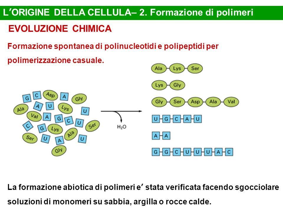 L'ORIGINE DELLA CELLULA– 2. Formazione di polimeri EVOLUZIONE CHIMICA Formazione spontanea di polinucleotidi e polipeptidi per polimerizzazione casual