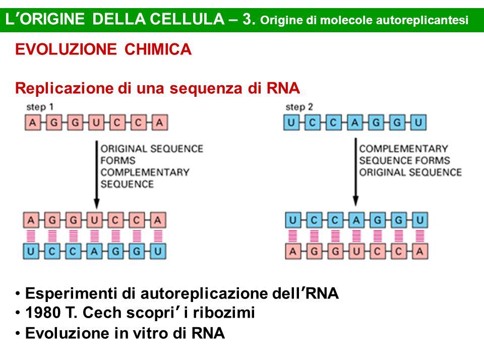 EVOLUZIONE CHIMICA Replicazione di una sequenza di RNA Esperimenti di autoreplicazione dell'RNA 1980 T. Cech scopri' i ribozimi Evoluzione in vitro di