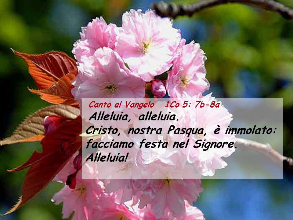 Canto al Vangelo 1Co 5: 7b-8a Alleluia, alleluia.