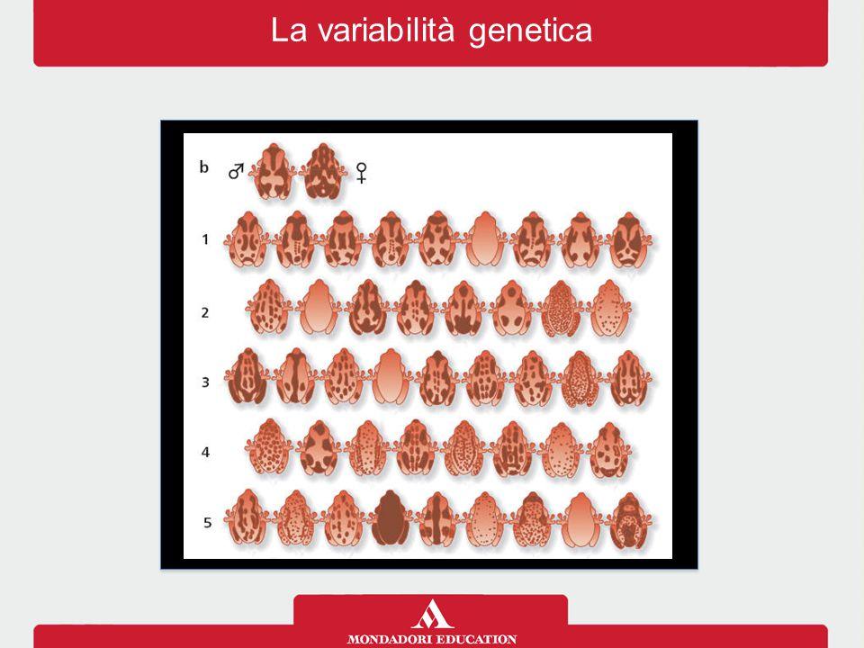 La variabilità genetica
