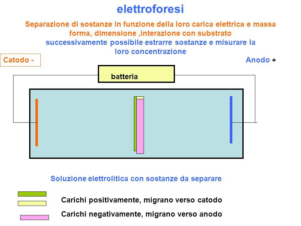 elettroforesi Separazione di sostanze in funzione della loro carica elettrica e massa forma, dimensione,interazione con substrato successivamente possibile estrarre sostanze e misurare la loro concentrazione Soluzione elettrolitica con sostanze da separare Catodo - Anodo + Carichi positivamente, migrano verso catodo Carichi negativamente, migrano verso anodo batteria