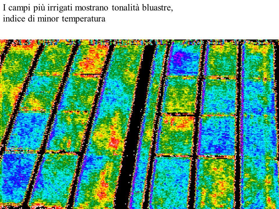 I campi più irrigati mostrano tonalità bluastre, indice di minor temperatura