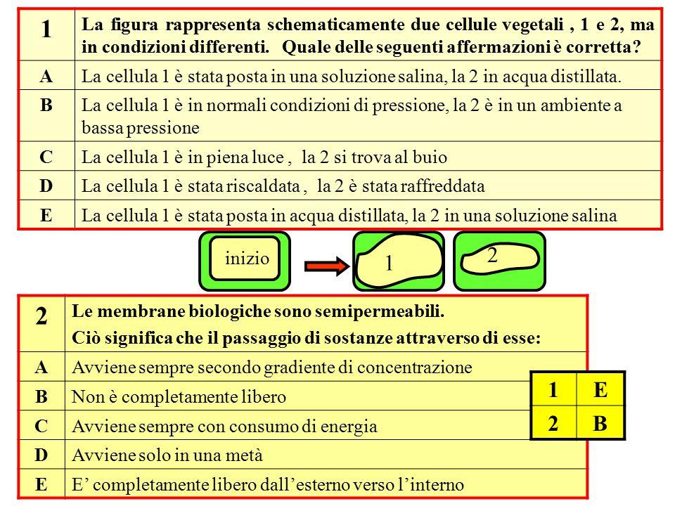 1 La figura rappresenta schematicamente due cellule vegetali, 1 e 2, ma in condizioni differenti. Quale delle seguenti affermazioni è corretta? ALa ce
