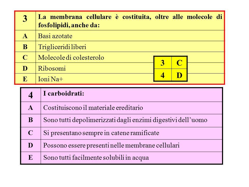 3 La membrana cellulare è costituita, oltre alle molecole di fosfolipidi, anche da: ABasi azotate BTrigliceridi liberi CMolecole di colesterolo DRibos