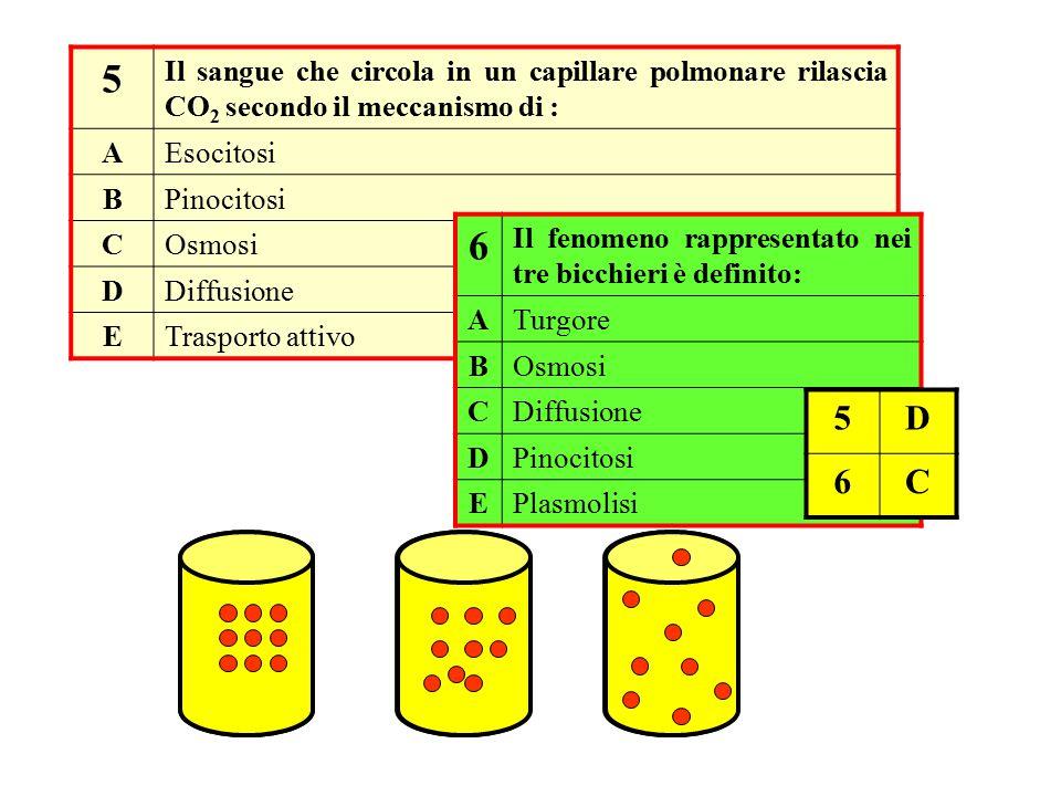 5 Il sangue che circola in un capillare polmonare rilascia CO 2 secondo il meccanismo di : AEsocitosi BPinocitosi COsmosi DDiffusione ETrasporto attiv