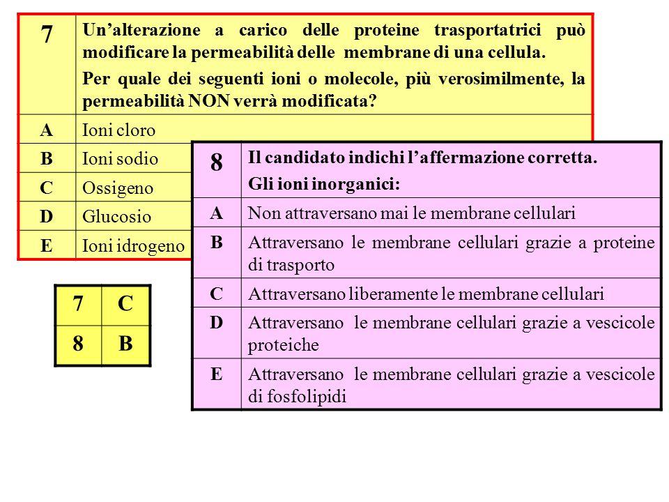 7 Un'alterazione a carico delle proteine trasportatrici può modificare la permeabilità delle membrane di una cellula. Per quale dei seguenti ioni o mo