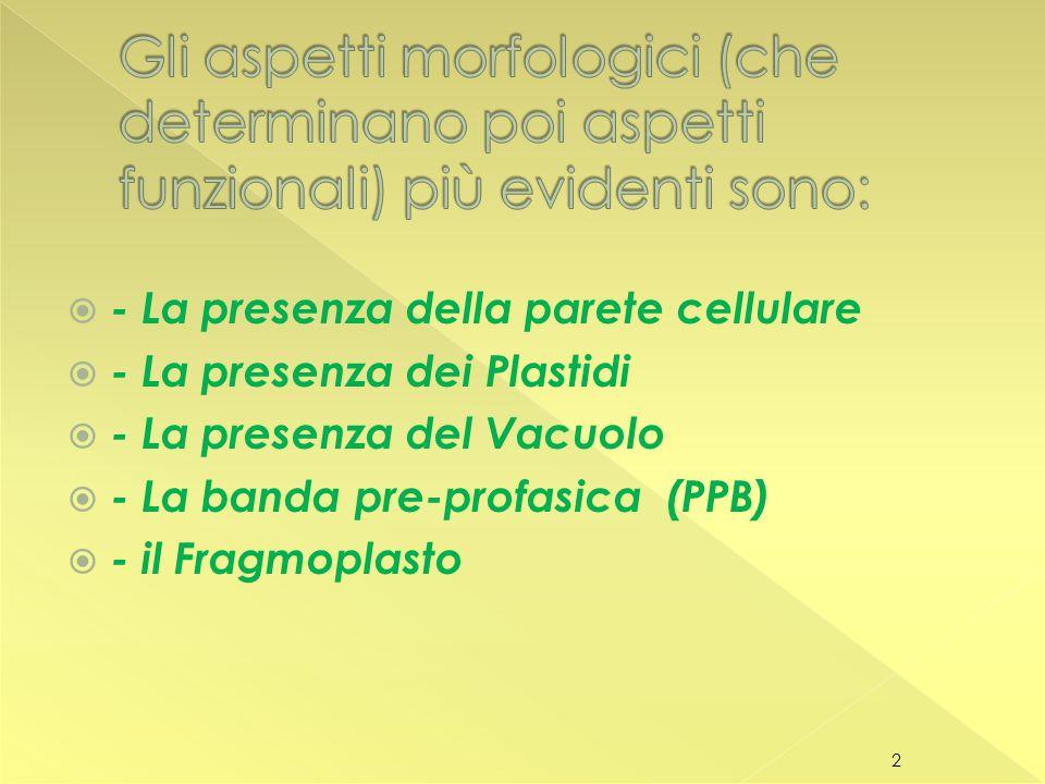  - La presenza della parete cellulare  - La presenza dei Plastidi  - La presenza del Vacuolo  - La banda pre-profasica (PPB)  - il Fragmoplasto 2