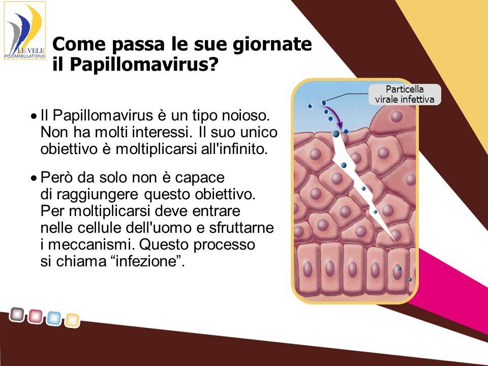 Come passa le sue giornate il Papillomavirus. Il Papillomavirus è un tipo noioso.