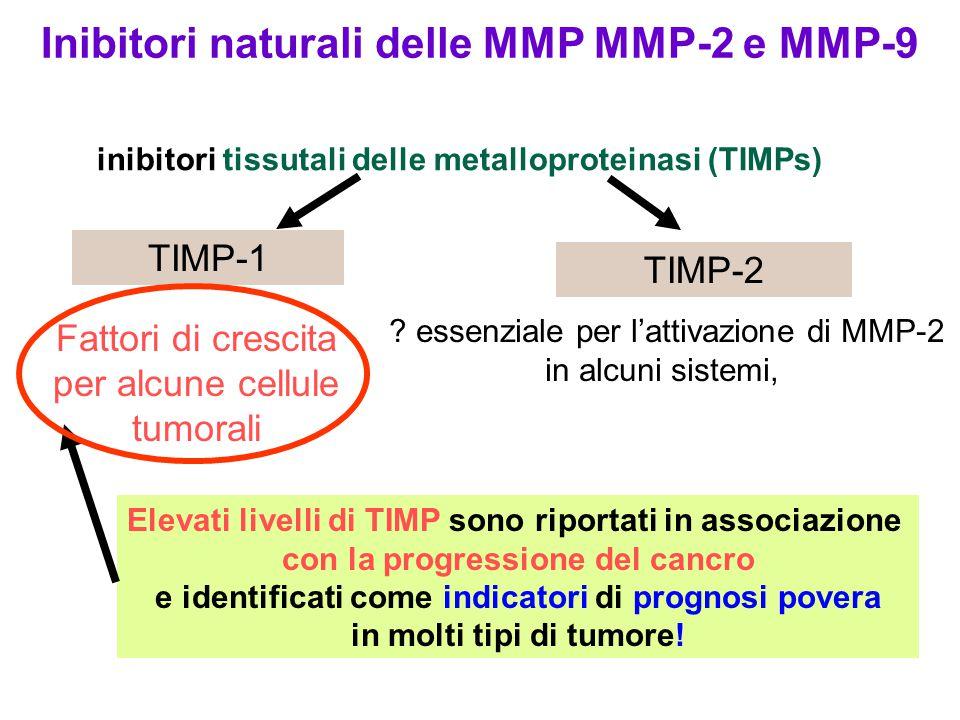 inibitori tissutali delle metalloproteinasi (TIMPs) Fattori di crescita per alcune cellule tumorali TIMP-1 .
