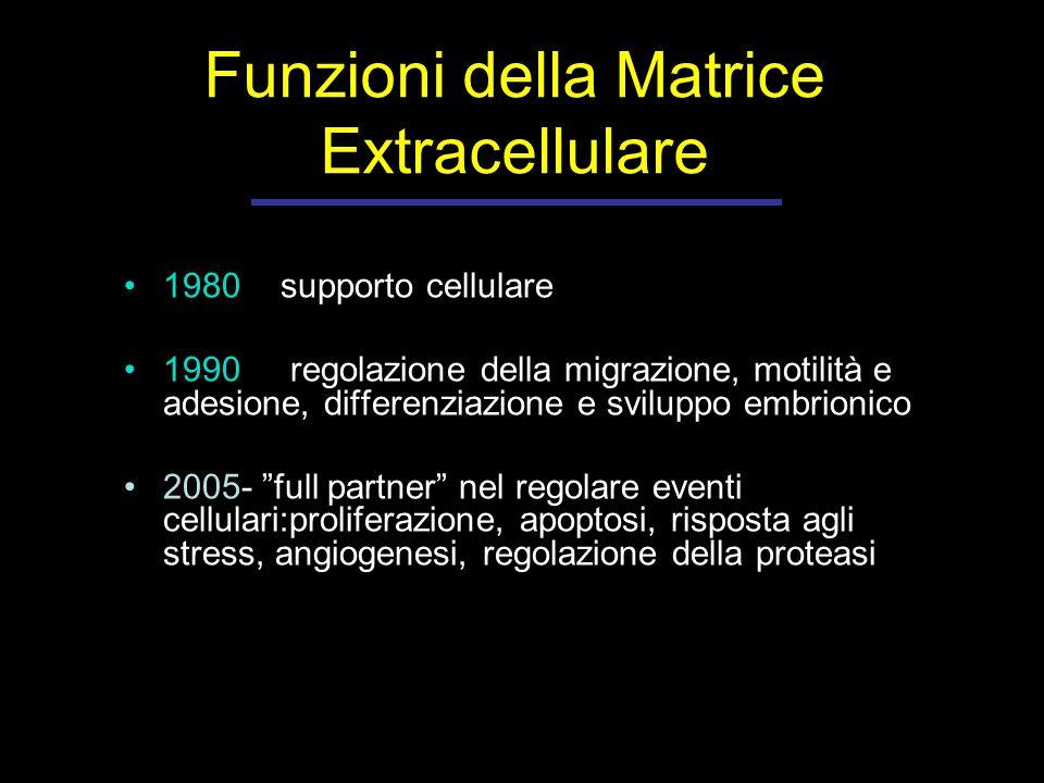 1980- supporto cellulare 1990- regolazione della migrazione, motilità e adesione, differenziazione e sviluppo embrionico 2005- full partner nel regolare eventi cellulari:proliferazione, apoptosi, risposta agli stress, angiogenesi, regolazione della proteasi Funzioni della Matrice Extracellulare