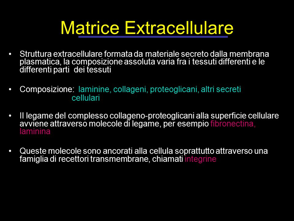 Matrice Extracellulare Struttura extracellulare formata da materiale secreto dalla membrana plasmatica, la composizione assoluta varia fra i tessuti differenti e le differenti parti dei tessuti Composizione: laminine, collageni, proteoglicani, altri secreti cellulari Il legame del complesso collageno-proteoglicani alla superficie cellulare avviene attraverso molecole di legame, per esempio fibronectina, laminina Queste molecole sono ancorati alla cellula soprattutto attraverso una famiglia di recettori transmembrane, chiamati integrine