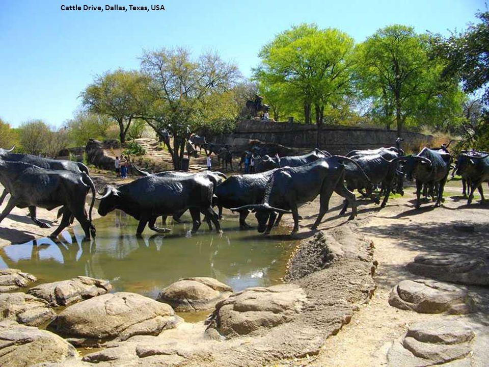Cattle Drive, Dallas, Texas, USA